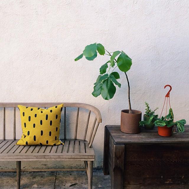 Laura Carignan / Cotton & Flax