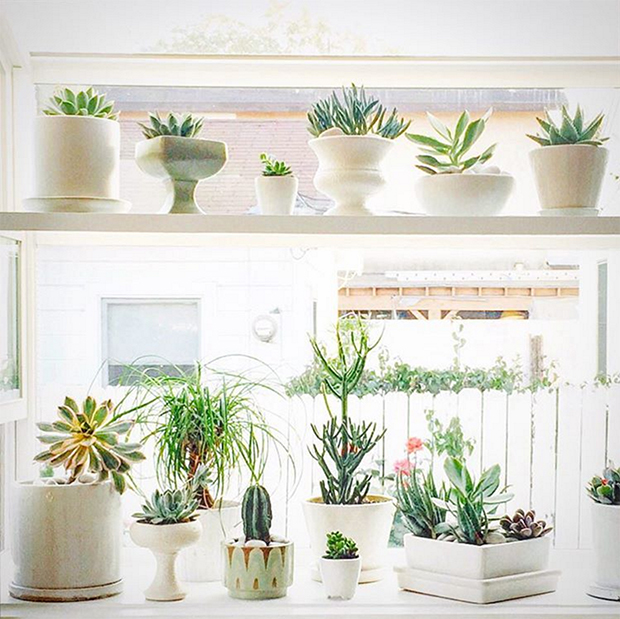 Plant Decor Inspiration, Blogs We Love