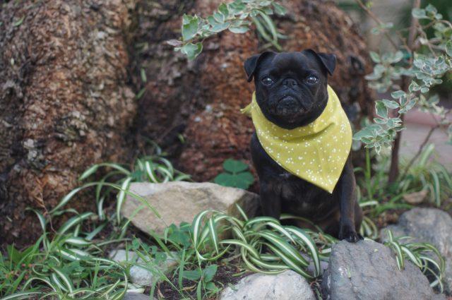 Yoshi in a bandana