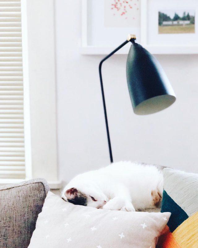 Erin Austen Abbott's cozy sofa