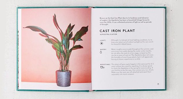 Little Book of House Plants - Best decor books